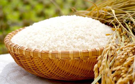ハーヴェストのお米(コシヒカリ)の生産販売