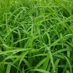 稲の成長 パート1
